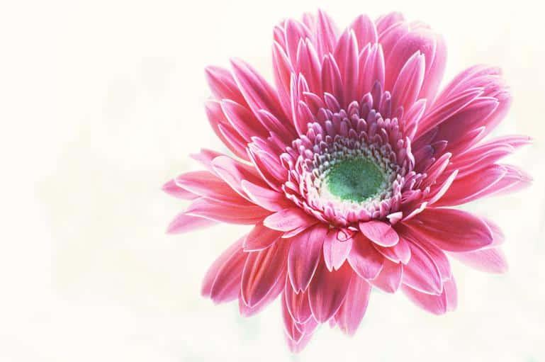 Blomster fra udlandet